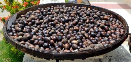 pulau hatta nuts