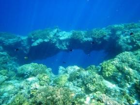 snorkelling hatta bridge