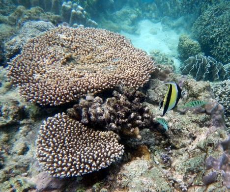 snorkelling pulau hatta fish