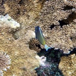 pulau Bair Snorkeling 2