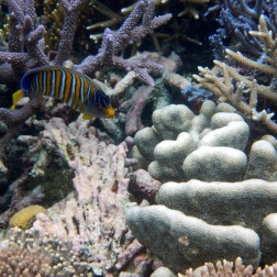 Pulau Bair snorkeling 3
