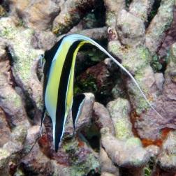 Pulau Bair snorkeling 4