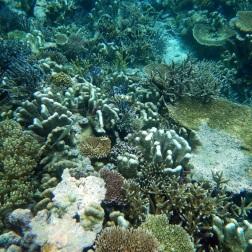 pulau Bair snorkeling